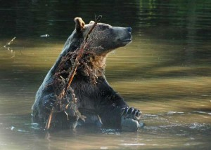 grizzly_04